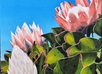 Proteas at Callicoma Hill by Lisa Jane Gaudron