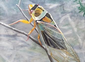 Shining Chorus - a Cicada by Lisa Jane Gaudron